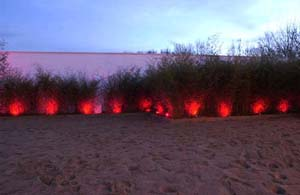 osvětlení keřů1